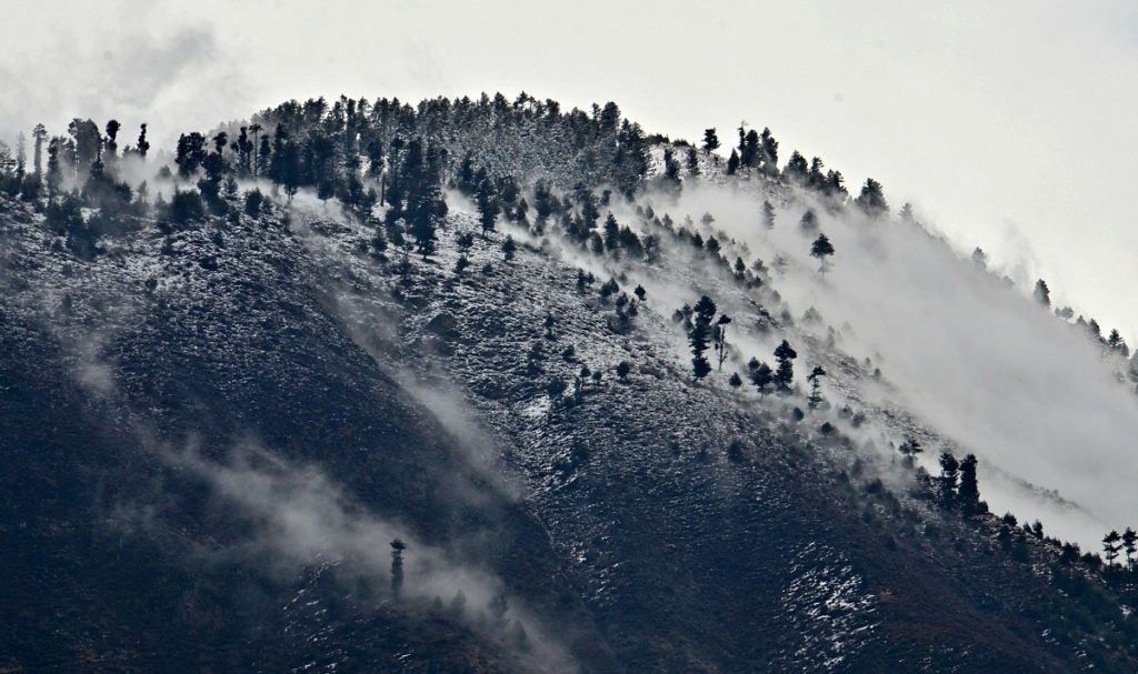 The snow covered white hill doted with green trees at Srinagar, Kashmir.