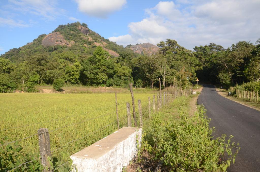 Kundadri Hills, Agumbe.