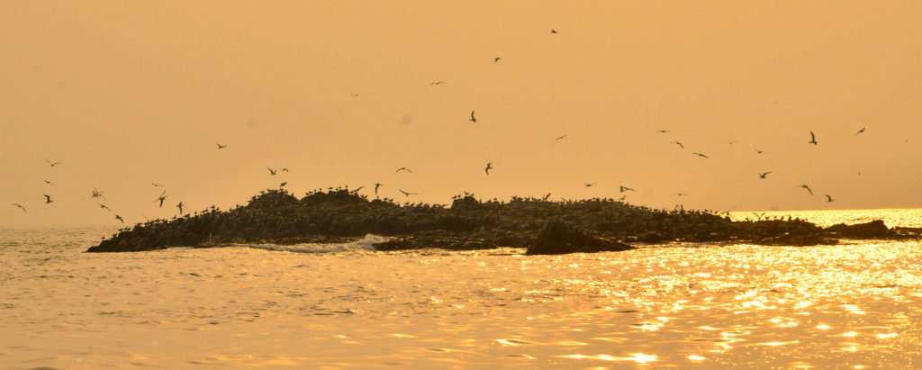 Sea birds frequent one of the adjoining landmass of St. Marry Island.